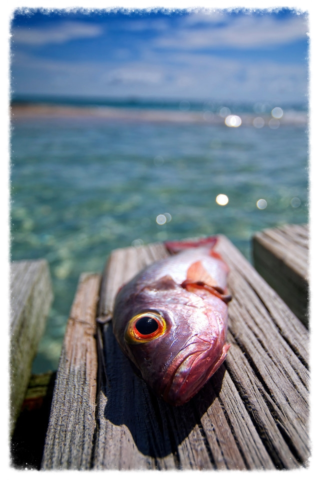belize-fish.jpg