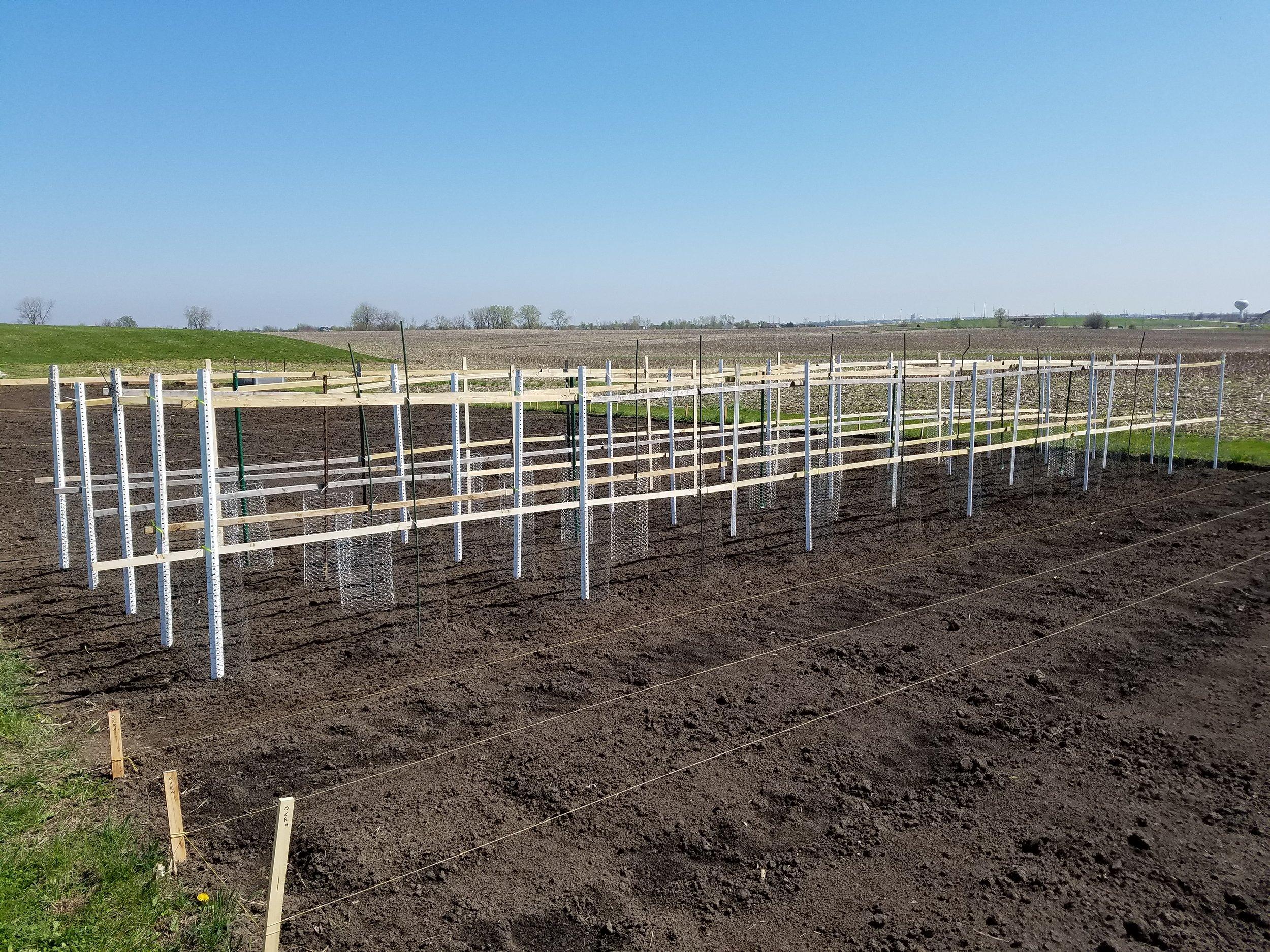 Garden Trellis and rows.jpg