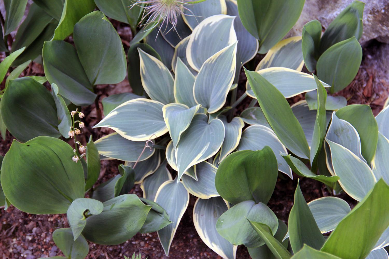 Green_Acres_Plant.H.LP.jpg