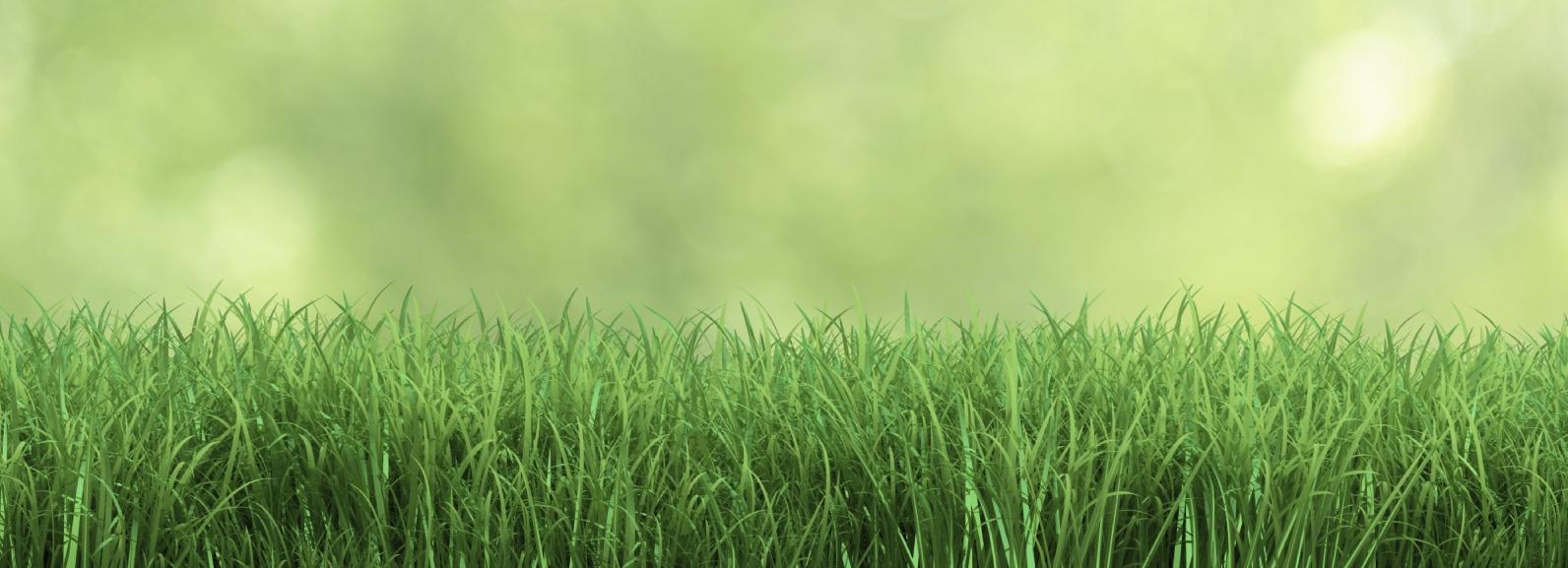 stock-photo-39577466-fresh-grass.jpg