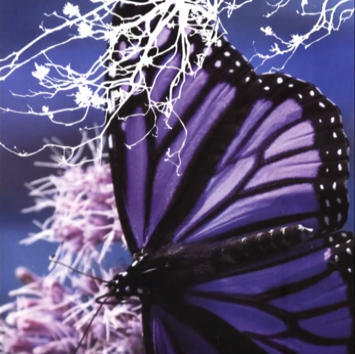 Natalie Flowers - Outside In ( 2005 )