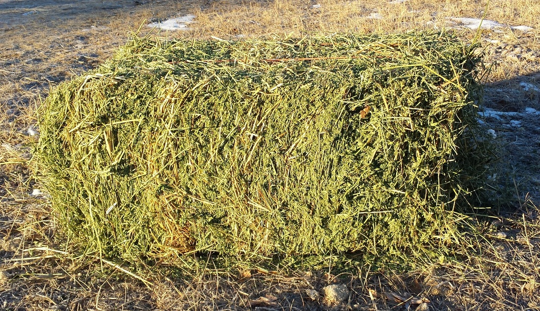 Bale of hay -- or ticking bomb?