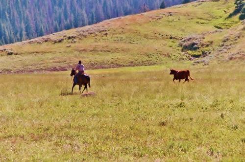 cow working chris ellsworth horsemanship clinic