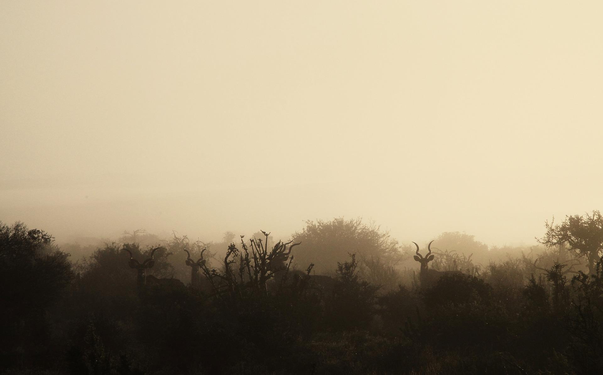morning-2105944_1920.jpg