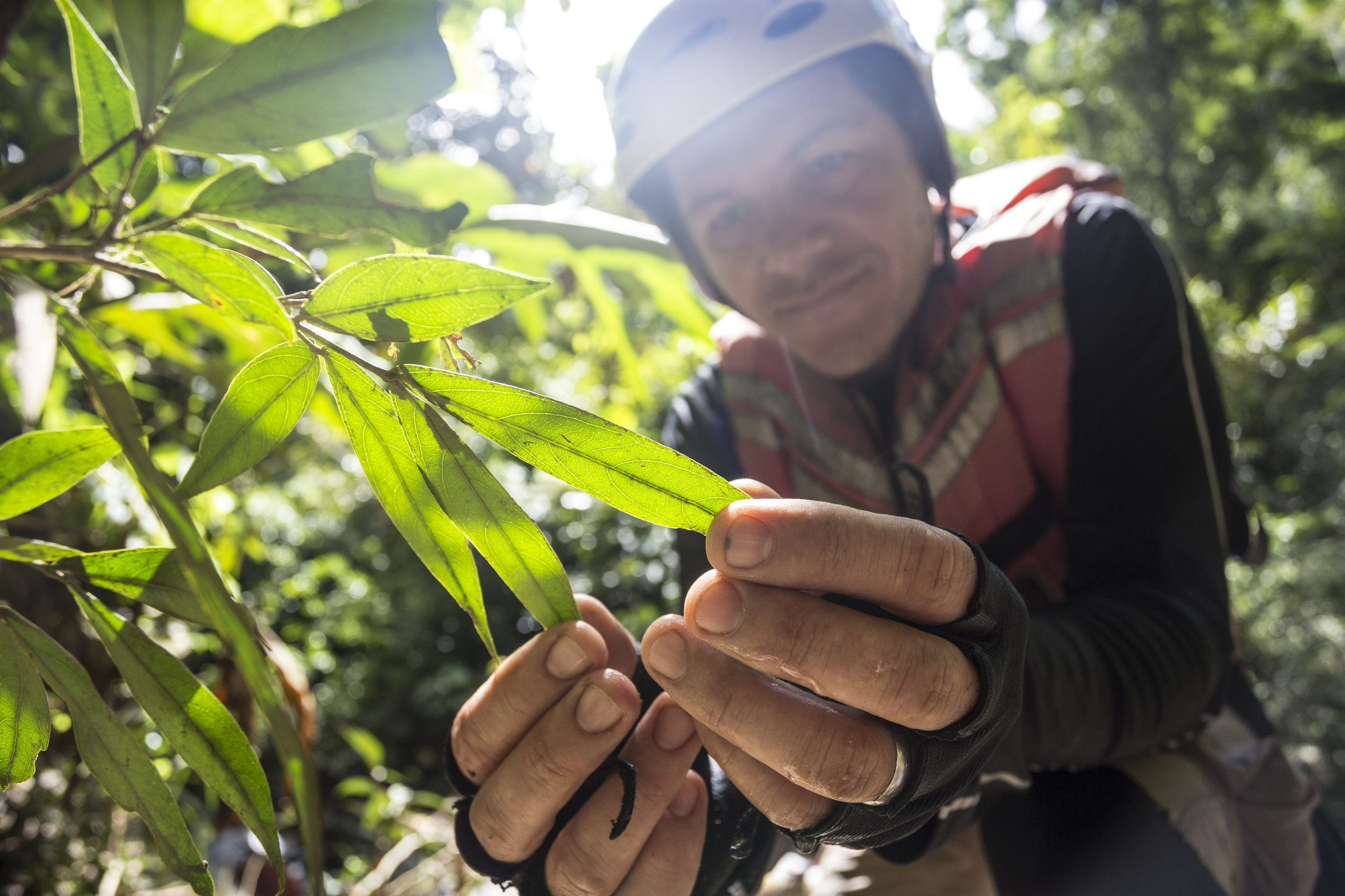Saul Hoyos identificado plantas endemica del Rio Samana, Felipe Mesa .jpg