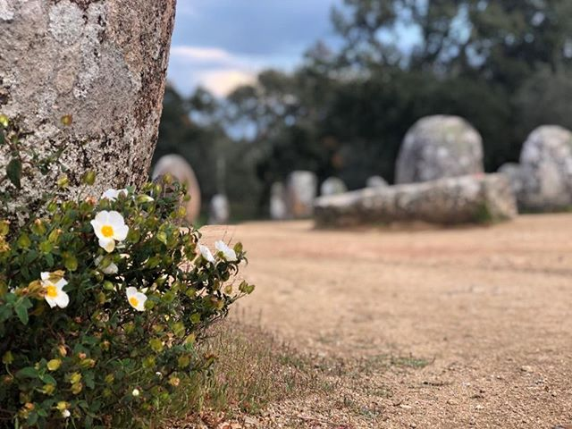 The monoliths, older than Stone Henge, 6k along a dirt track, no admission and not a soul in sight, near Évora, Portugal.  So much here to explore.