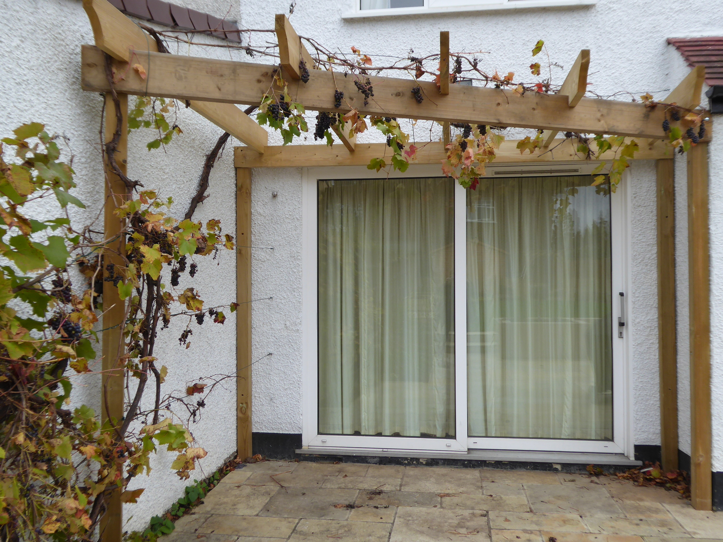 The only plant to be retained was the wonderful grapevine. We designed a pergola to support it, and it will now be trained over the living room doors.