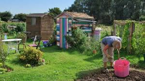 Allotments 2.jpg