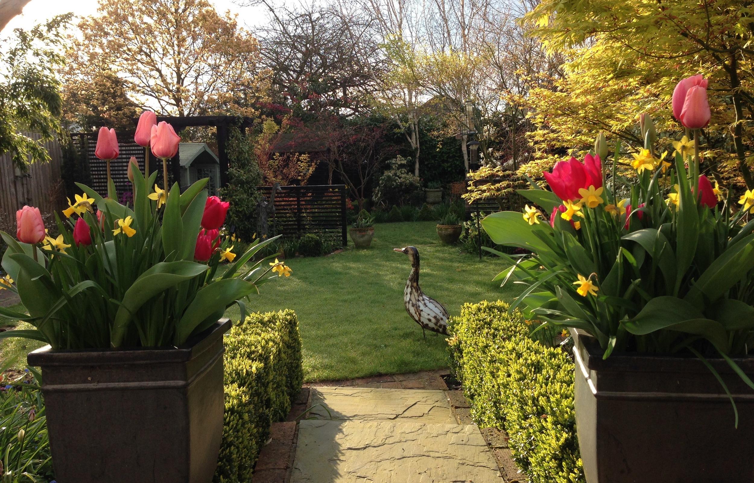 garden april 2016.jpg