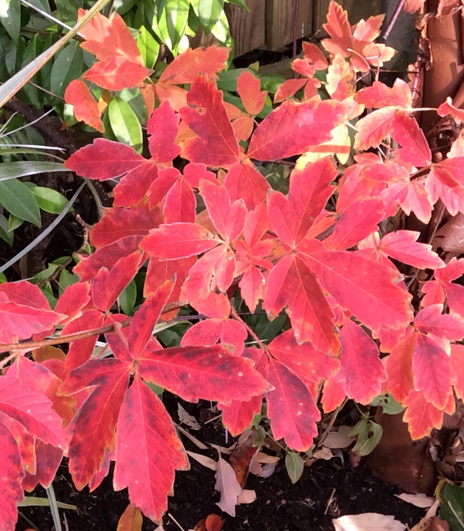 Autumn 6.jpg