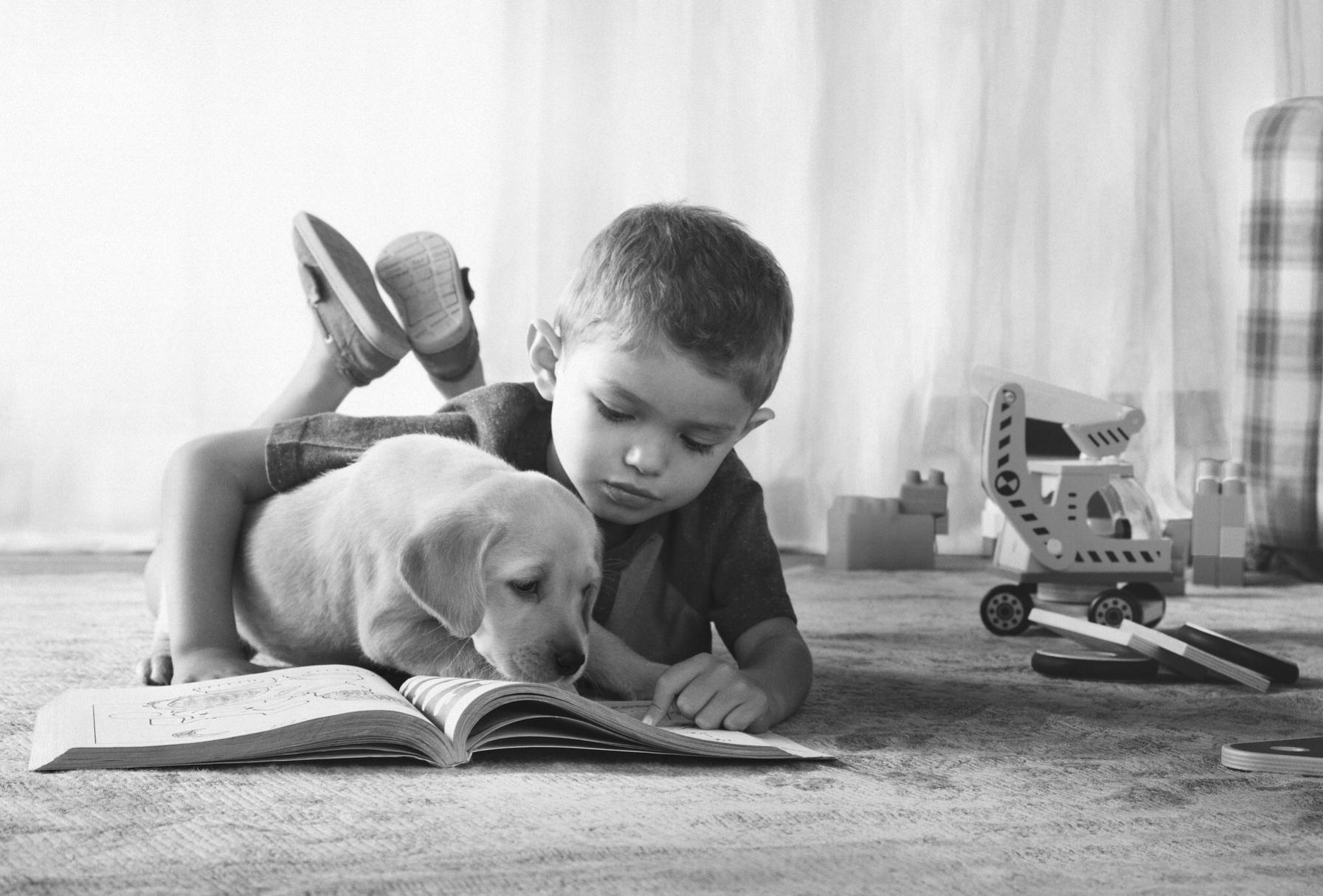 Pedigree Puppy15.jpg
