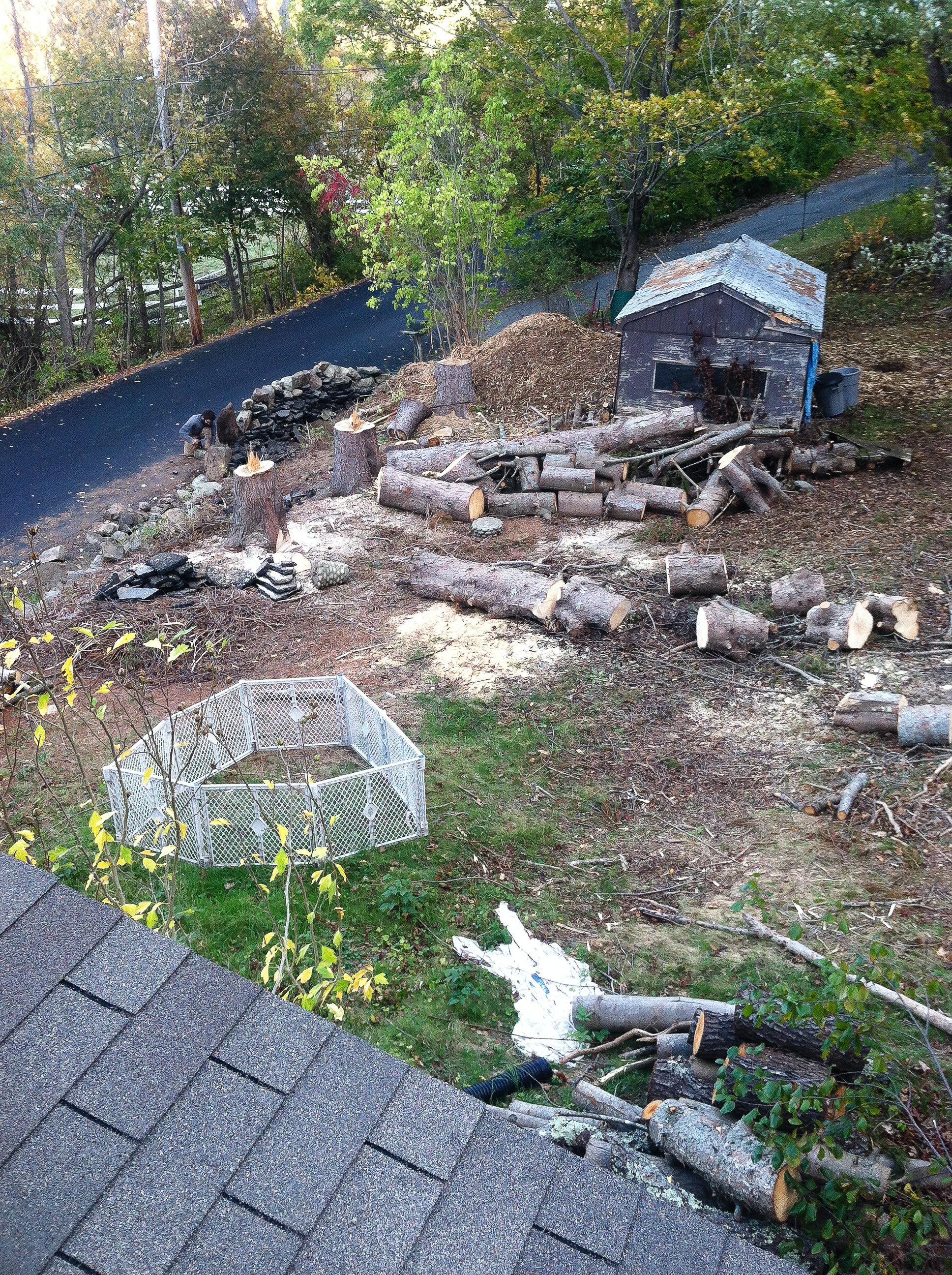 back from roof, spruces are cut up and most of the brush was wood chipped. rotting shed before removal.