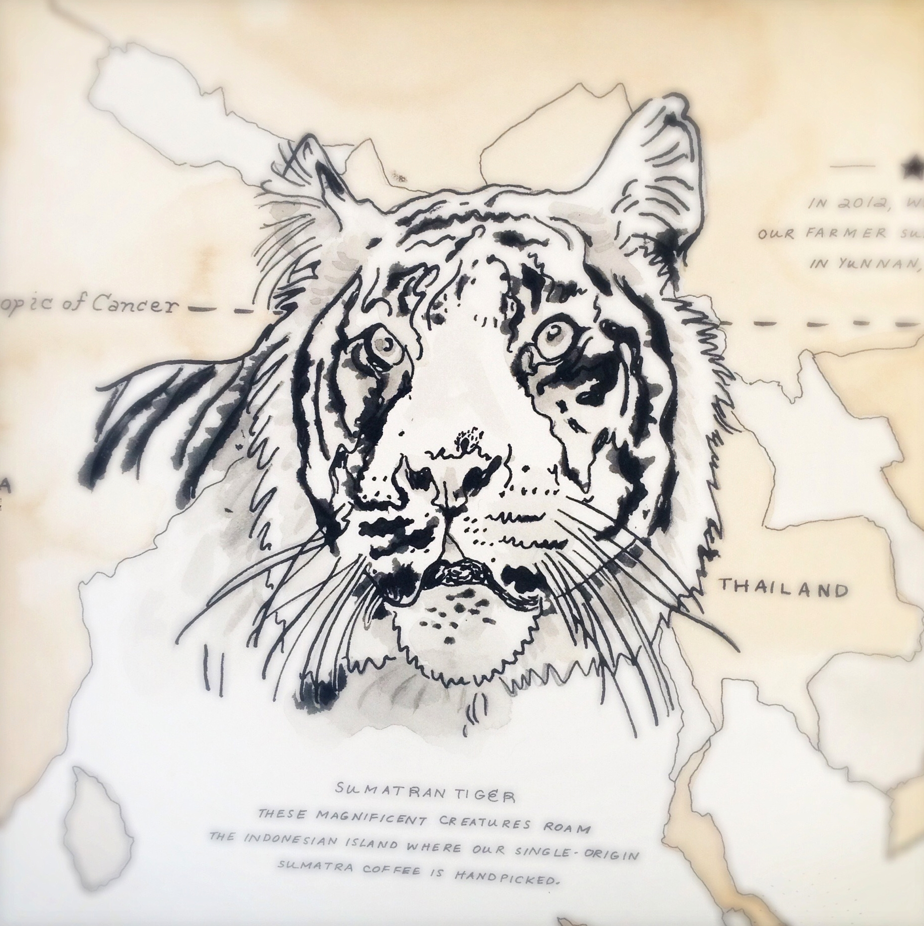 The Sumatran tiger was completed using Inkblot technique.  As a result, the markings on the coat and face are far richer and wilder.    Inkblot creates an expressive uncontrolled mark. It's made through transfer on trace paper. It's incredibly laborious but well worth the effort. This technique was the finishing touch on all the maps created for Starbucks.