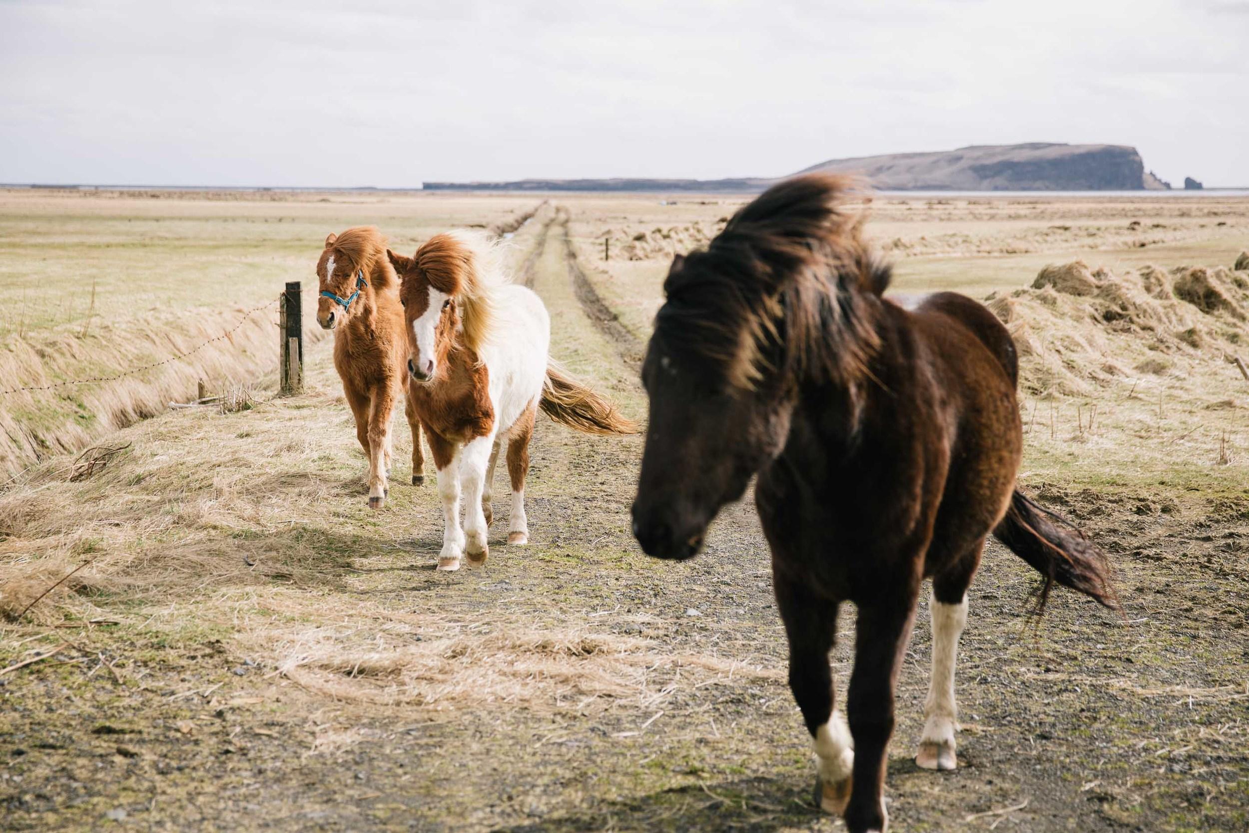 20150425_Iceland_0079-2.jpg