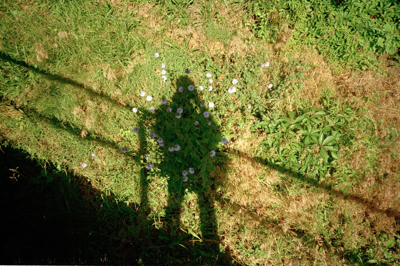 001ShadowFlower.jpg