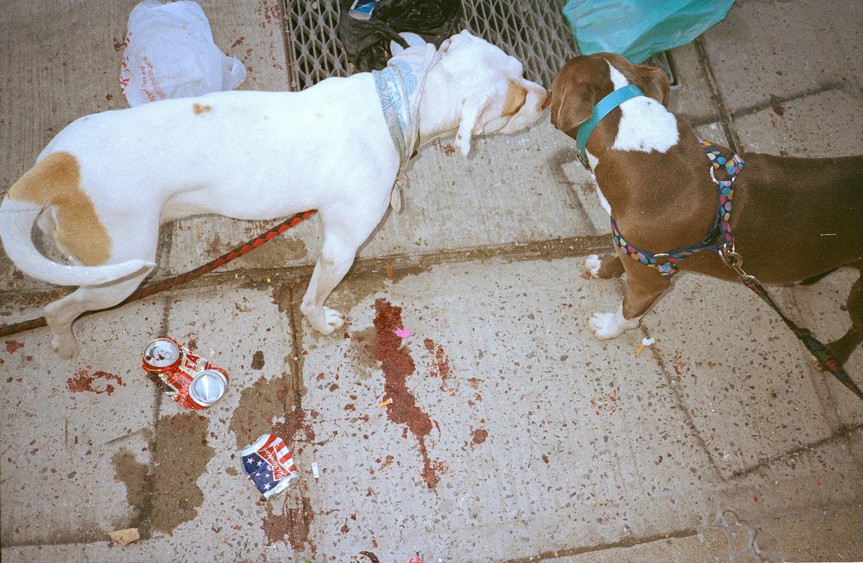 001bike-kill-dogs.jpg