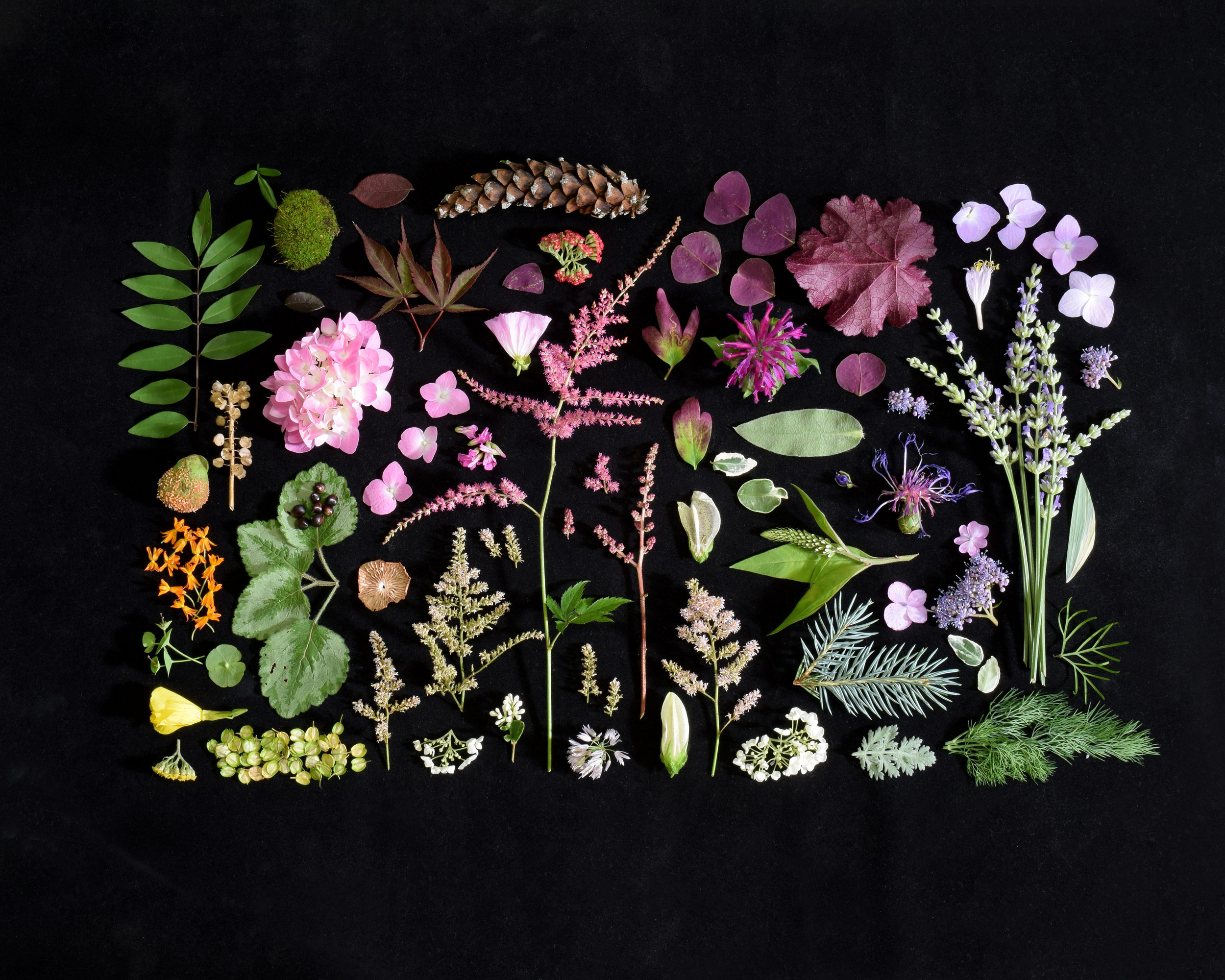 Lyndhurst Avenue (Summer) - Beautiful color flat-lay photograph of natural objects collected from a family's beloved garden on Lyndhurst Drive.