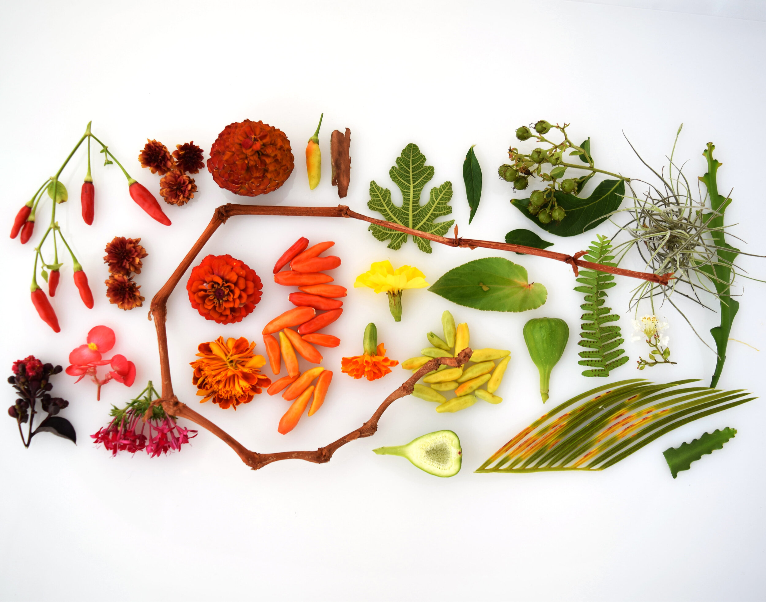 Palatka Florida - Beautiful color flat-lay photograph of natural objects collected from my grandmother's yard in Palatka, FL.