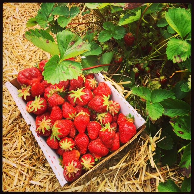 wildestrawberries