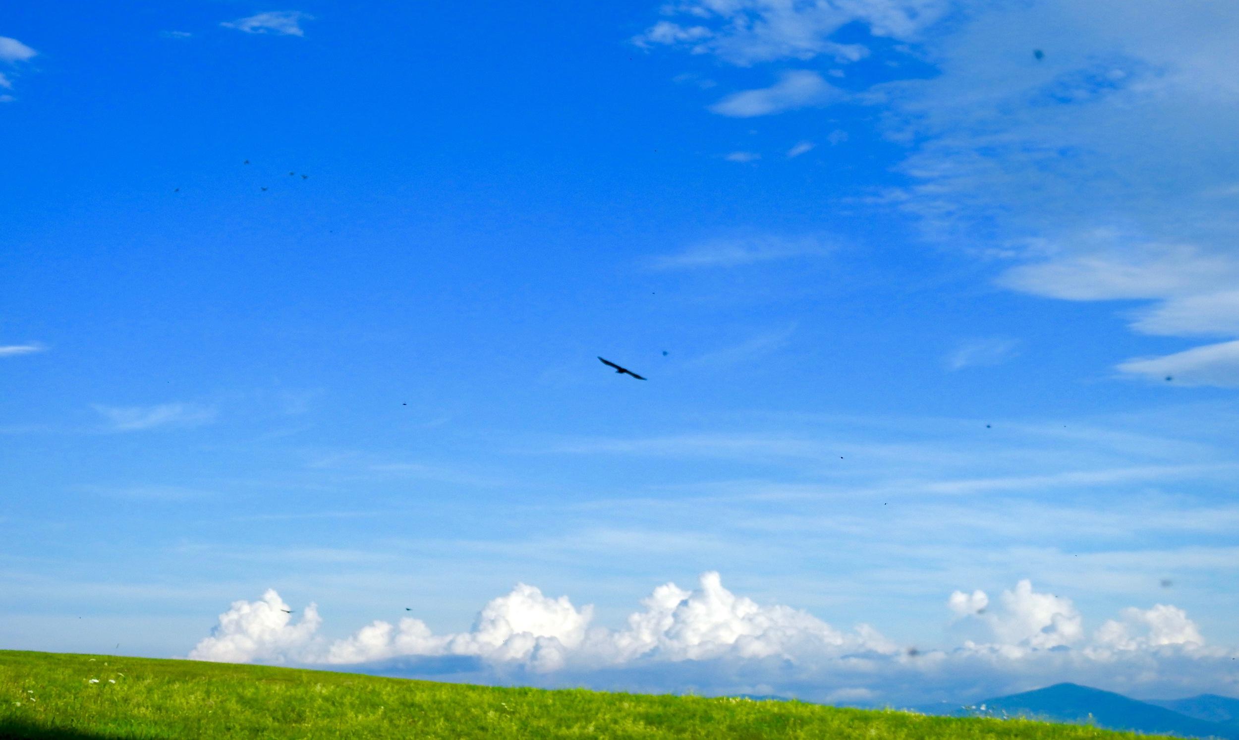 flyingsendoff