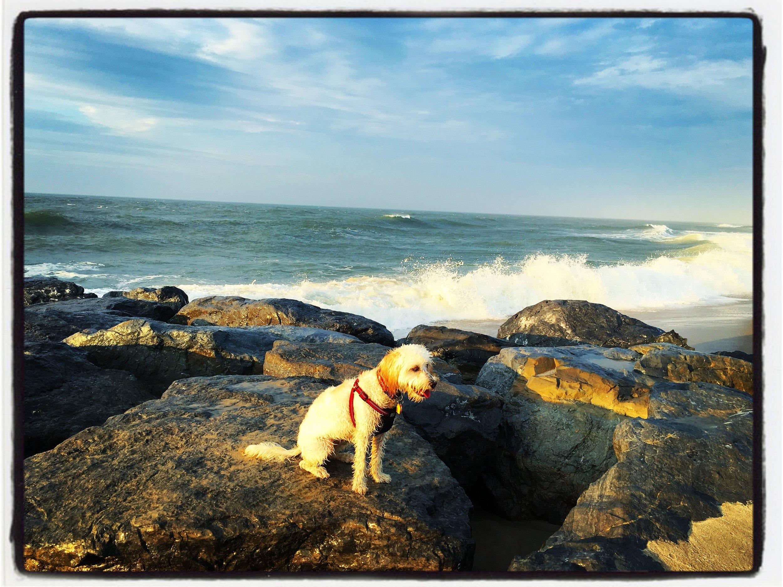 Golden Light: Allie loves rocks. I love Allie on rocks. This photo makes me happy!