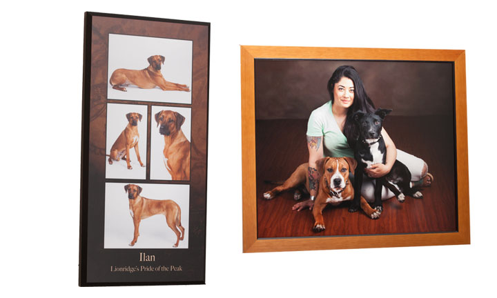 Springs Pet Portraits specializes in archival products to showcase your pet's portrait