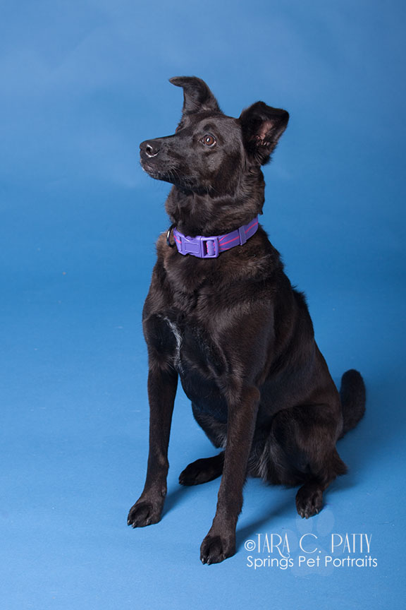rescue-dog-portraits-colorado-springs.jpg
