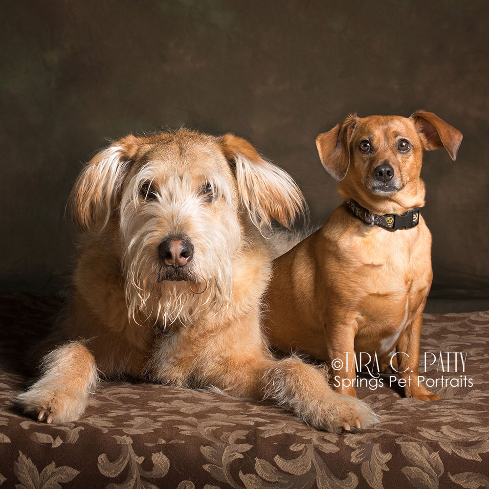 Simba, who is 18 years old (left) with his little buddy Jake.