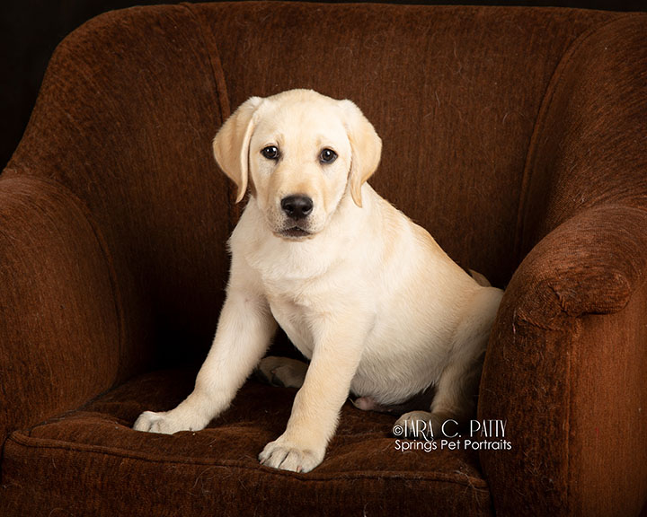 puppy-photos-at-home-Colorado-Springs.jpg