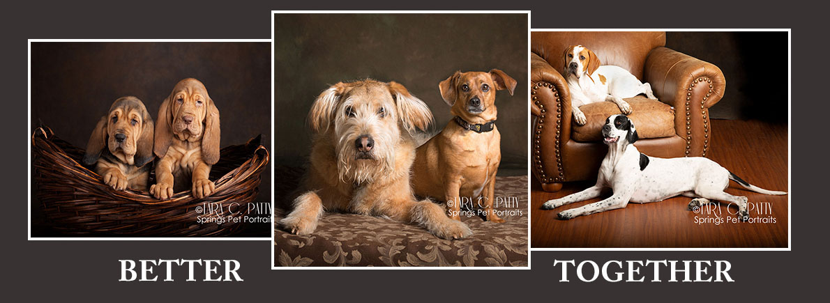 8-27 dog-togehter-in-photos-Colorado-Springs-Dog-Photograoher.jpg