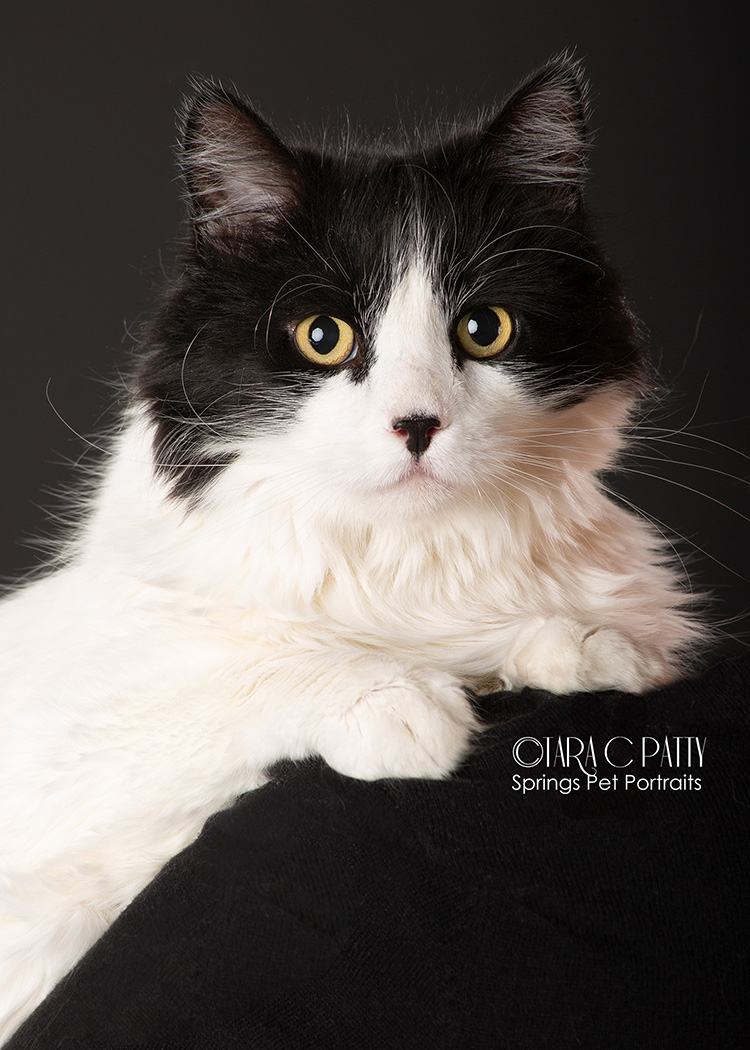 Studio cat pictures in Colorado Springs