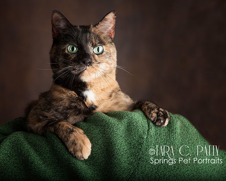 Colorado Springs cat photographer