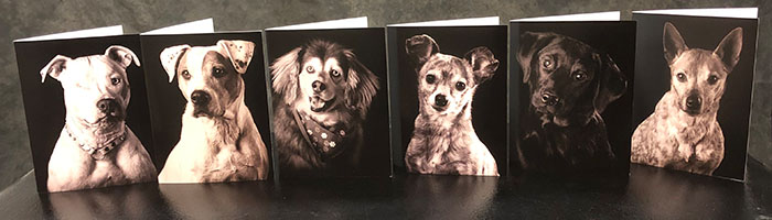 The dogs featured in the Dog Note Cards
