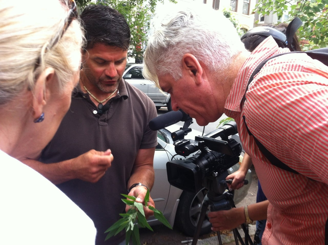 Urban foraging with the BBC