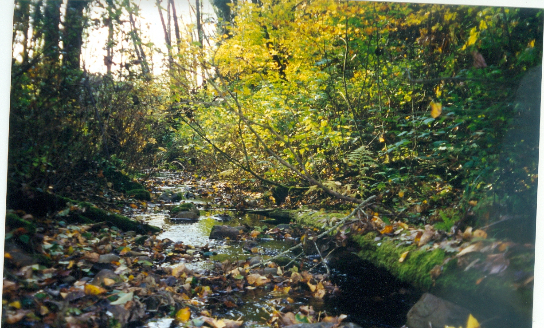 Haynie Creek with trees.jpg
