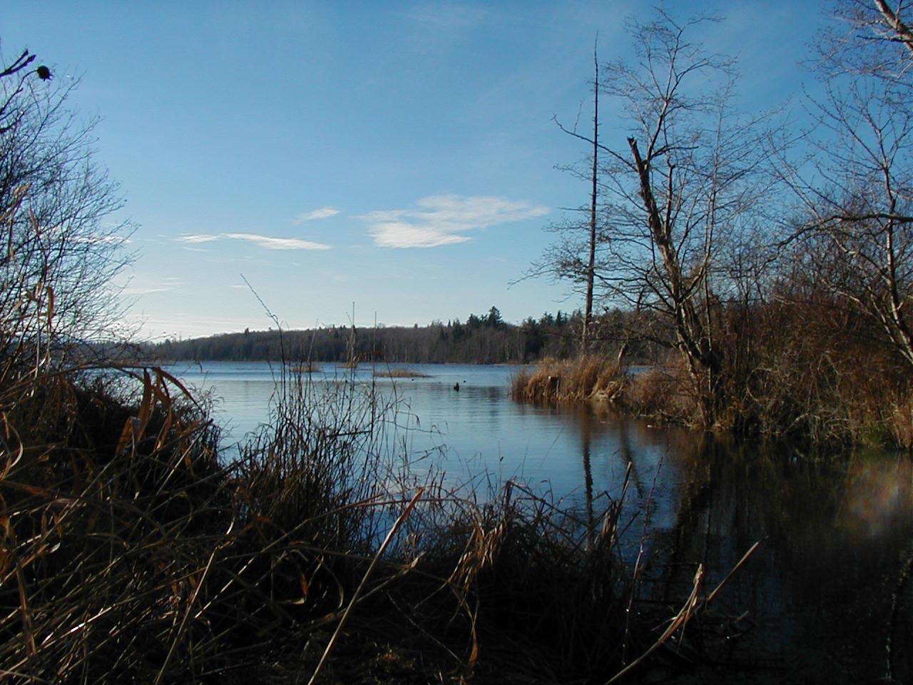 Back side of Terrell Lake.jpg