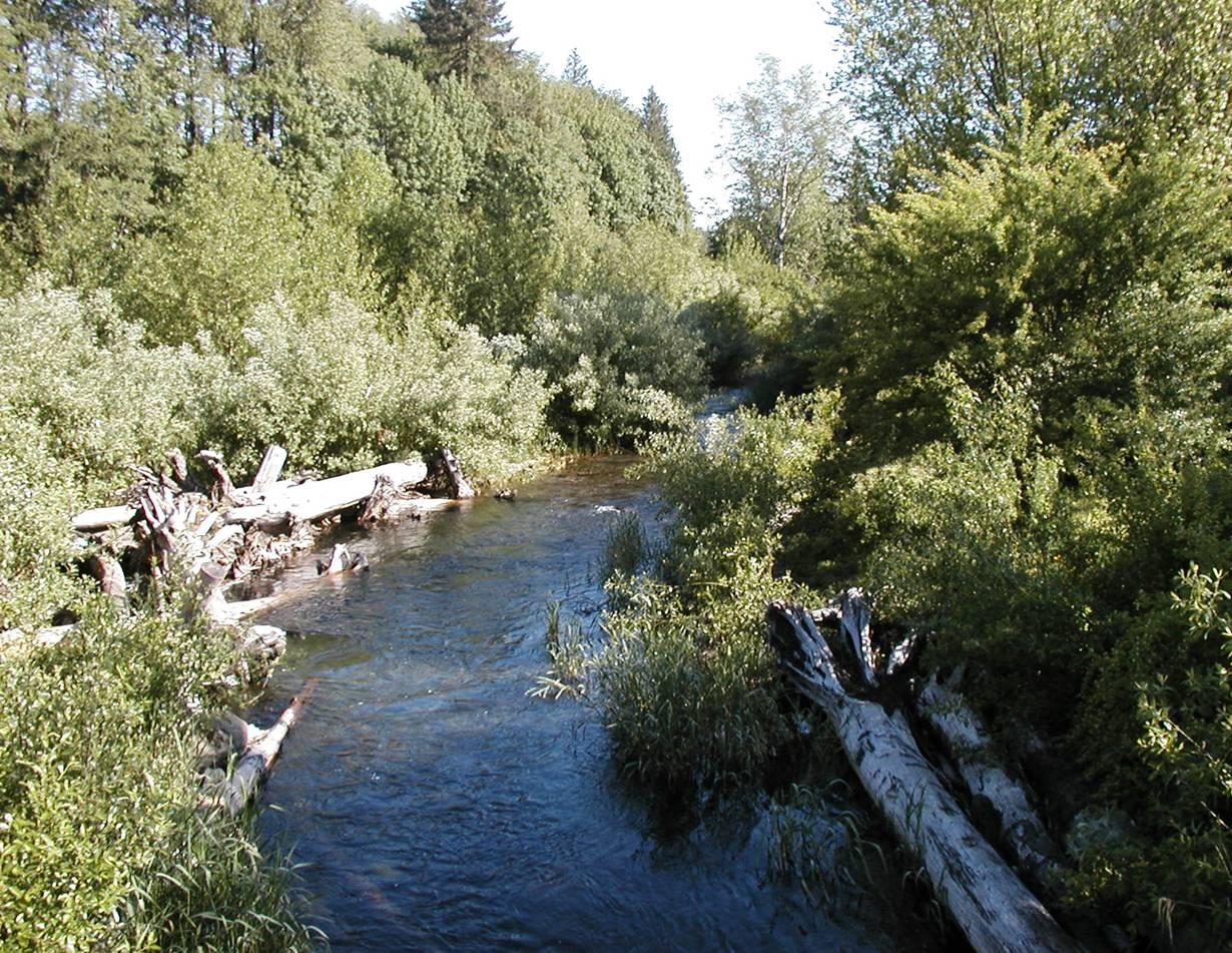 Kendall Creek_08 AFTER.jpg