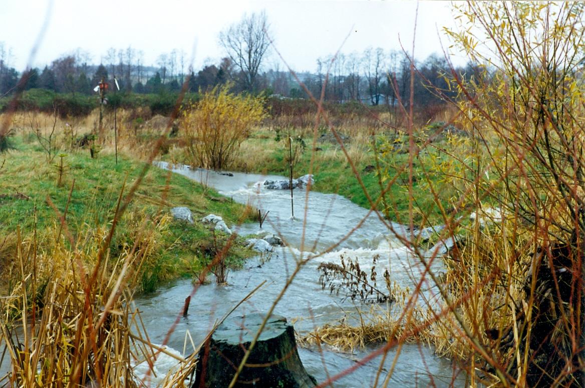 SCH-1.99-Creek with stump.jpg