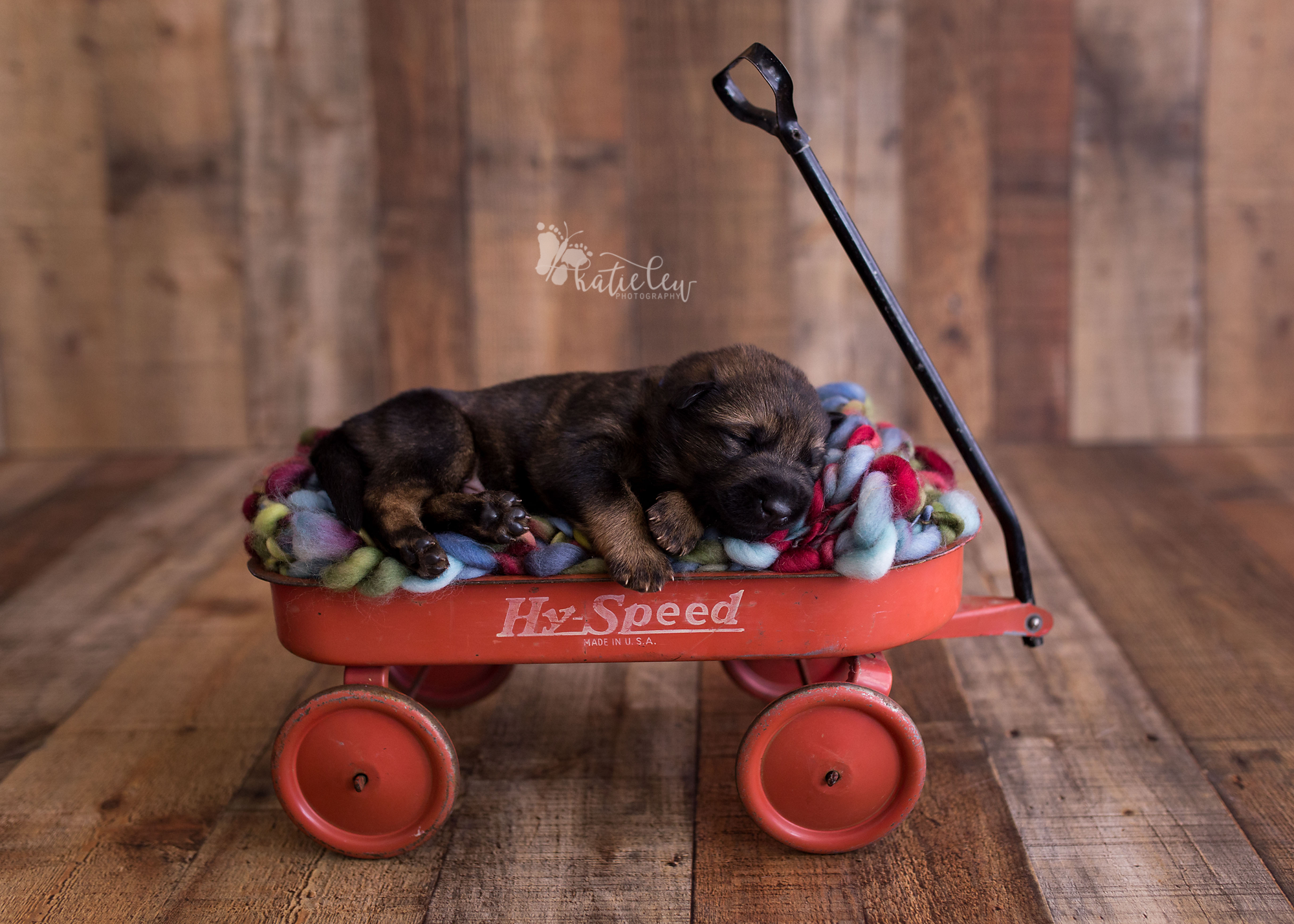 sweet puppy in a red wagon