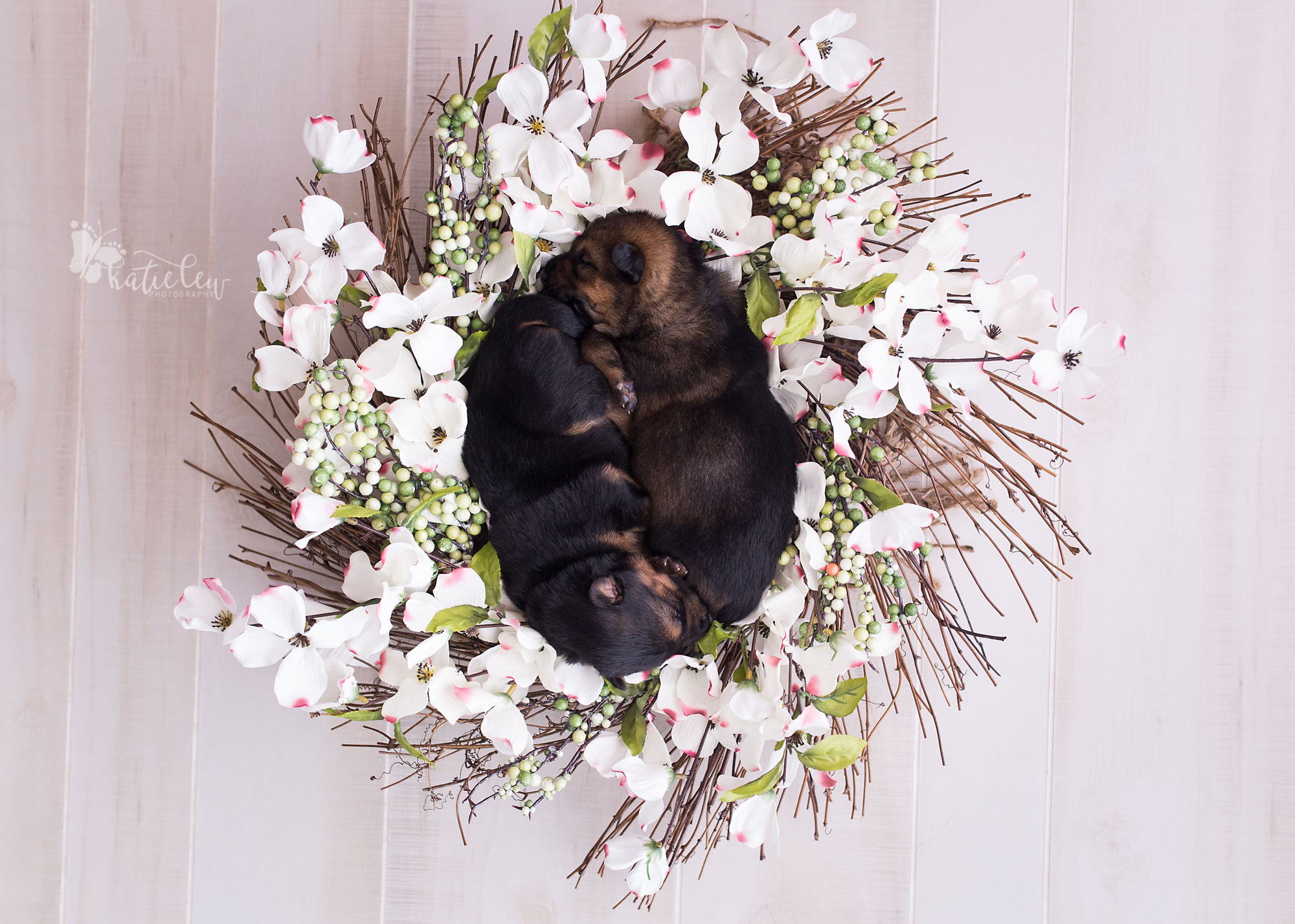 puppies lying in a floral wreath