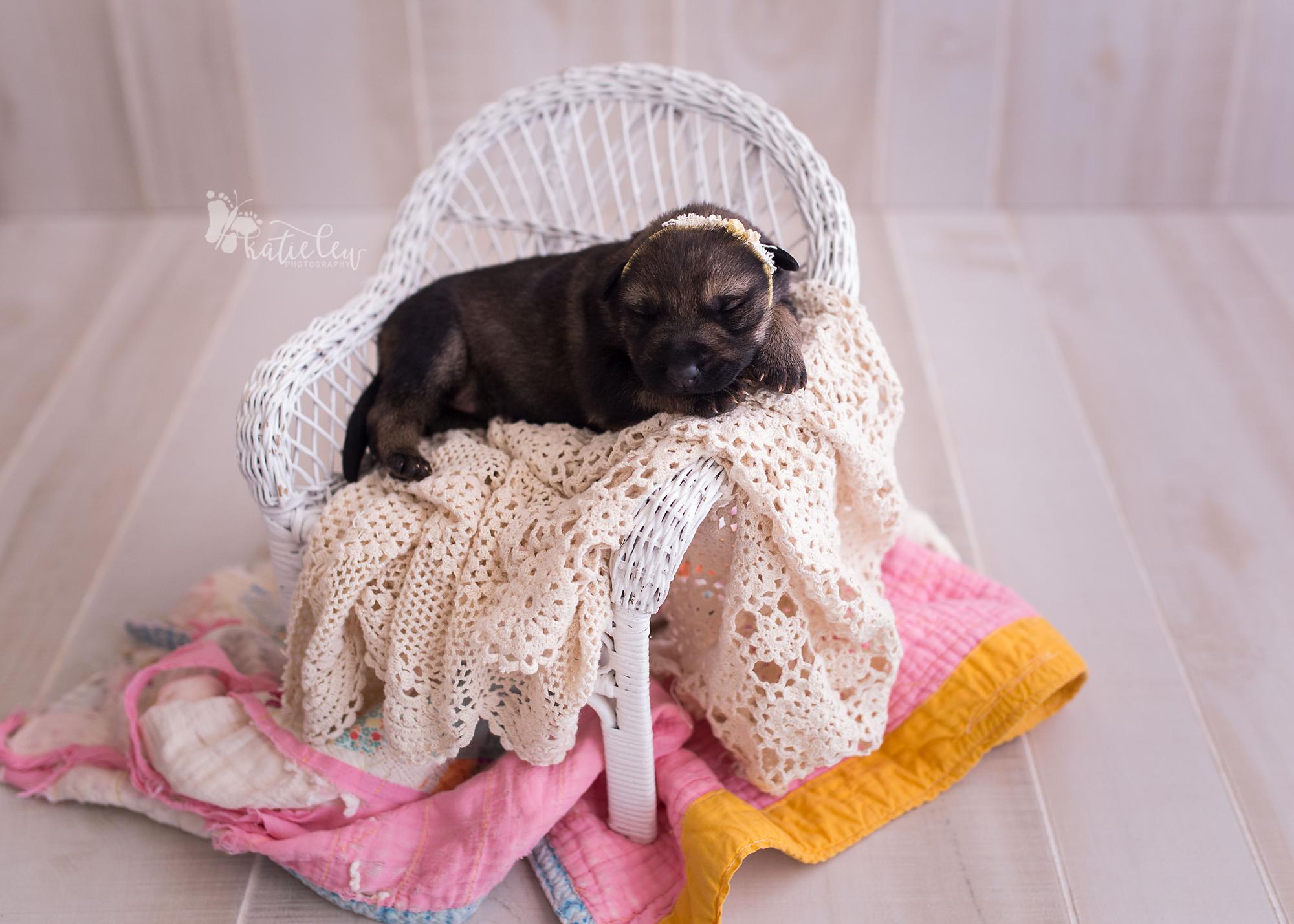 adorable girl german shepherd puppy