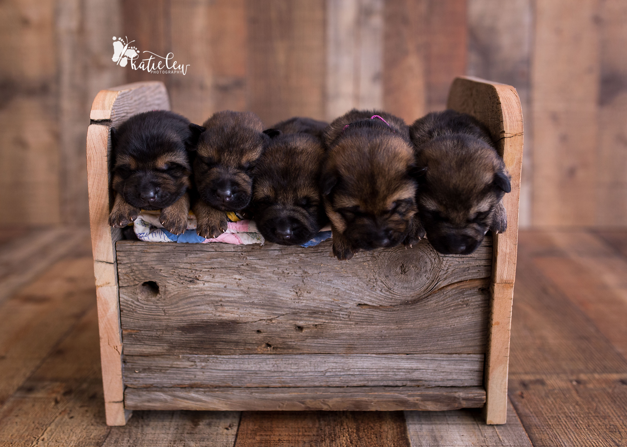 german shepherd puppies squished together in a bed photo prop
