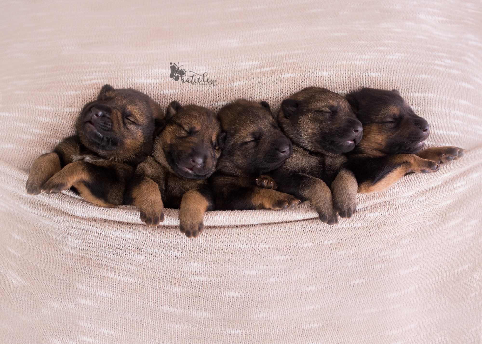 That one time I photographed adorable 10 days old puppies