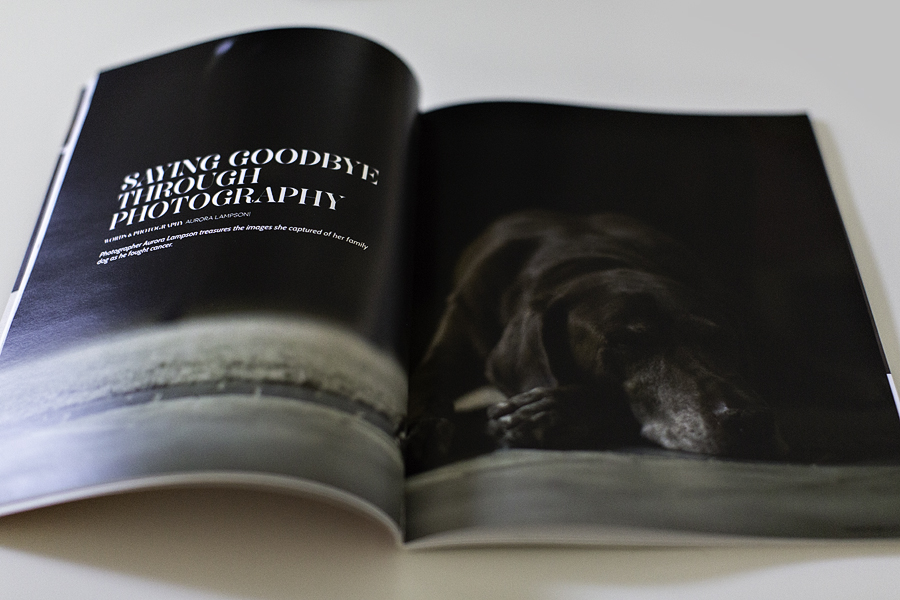 Ispire Magazine Lens Daisy Photography Pets - 1