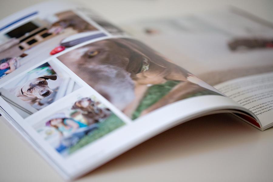 Ispire Magazine Lens Daisy Photography Pets - 2