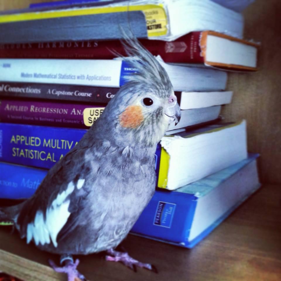 Abby bookcase