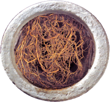 Root Cutting — All About Blocked Drains - Auckland's Drain