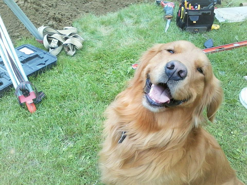 Every construction site needs a special helper! Photo by Paschal'Simon MacMurray