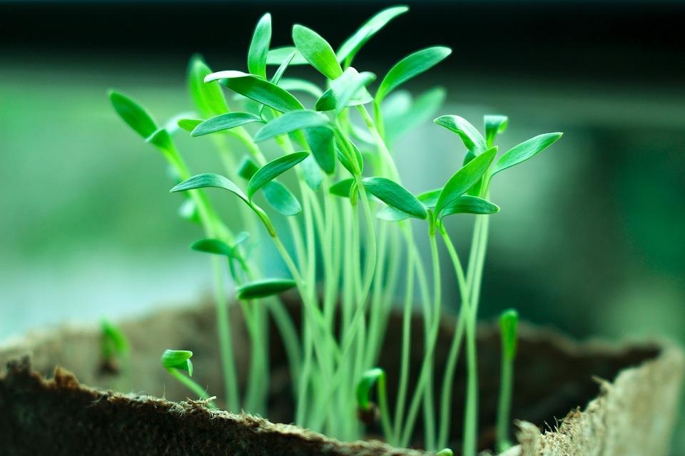 plants-2411458_960_720.jpg