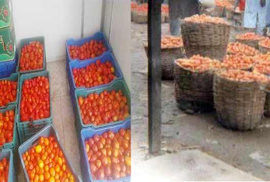 Packaging is one of the important aspects to consider in addressing postharvest losses in fruits and vegetables. It is enclosing food produce or product to protect it from mechanical injuries, tampering, and contamination from physical, chemical, and biological sources.  Packaging as a postharvest handling practice in tomato production is essential in putting the produce into sizeable portions for easy handling. However, using unsuitable packaging can cause damage, resulting in losses.  Some common packaging materials used in most developing countries include wooden crates, cardboard boxes, woven palm baskets, nylon sacks, jute sacks, and polythene bags.  Most of the abovementioned packaging materials do not give all the protection needed by the commodity. Whilst the majority of these packaging materials like the nylon sacks do not allow good aeration within the packaged commodity causing a build-up of heat due to respiration, others like the woven basket have rough surfaces and edges which cause mechanical injuries to the produce.  The wooden crate and the woven palm basket are some of the common packaging materials used in Nigeria, for packaging tomatoes. The major shortcoming of the wooden crate is in its height which creates a lot of compressive forces on fruits located at the base of the crate. These undesirable compressive forces cause internal injuries which finally result in reduced postharvest quality of the tomatoes.  So there is a great need for a better way of packaging tomatoes.